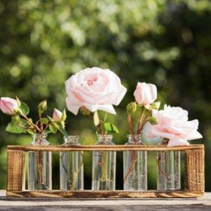 Sensology marketing olfativo rosas odotipo